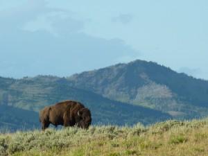 yellowstone-national-park-225589_1280