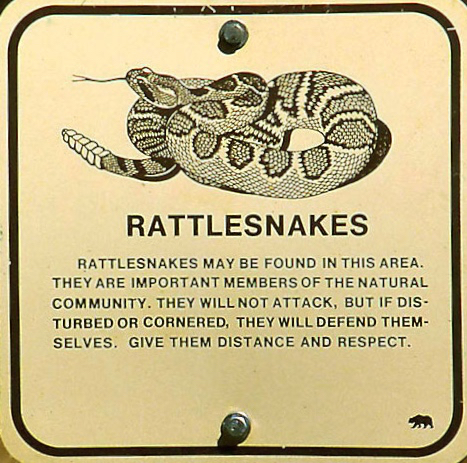 why rattlesnakes are important in nature